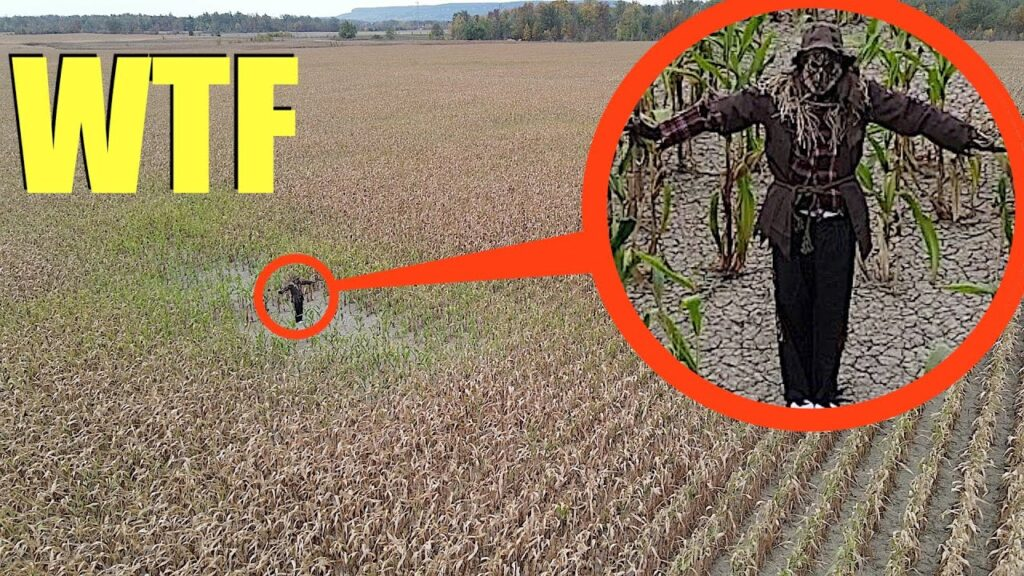 you won't believe what my drone saw in this haunted cornfield.. (the scarecrow is alive!)